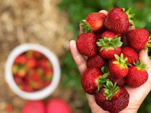 StrawberryHandful