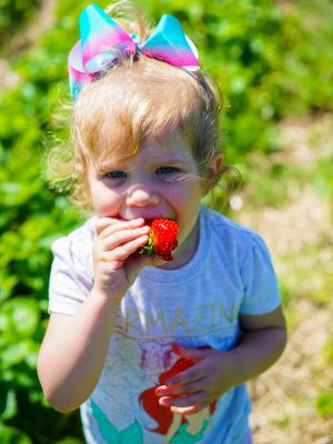 View More: http://casiecarowphotography.pass.us/strawberries19